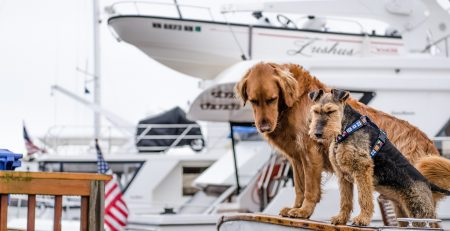 Dogs on boats